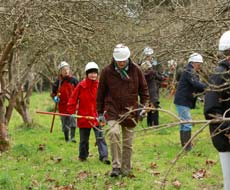 Orchard Restoration workshop