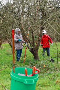 Orchards workshop